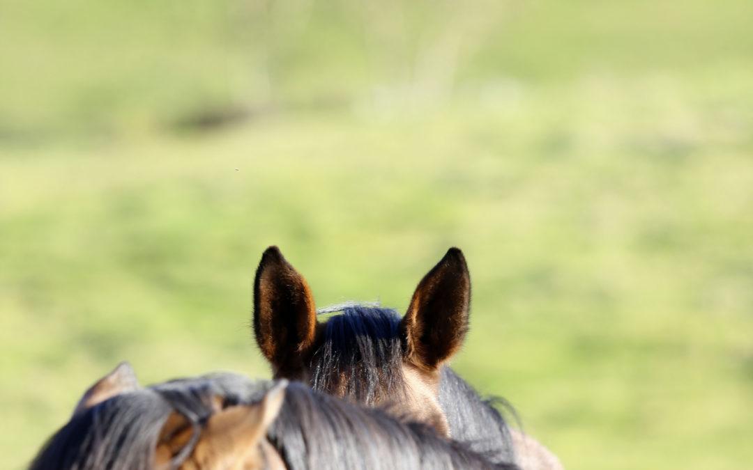 Le cheval à la conquête de nos territoires intimes : comment et pourquoi