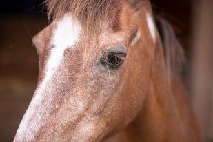 Un cheval meurt parmi les siens