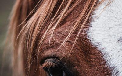 Pourquoi un cheval pourrait m'aider à vivre mieux?
