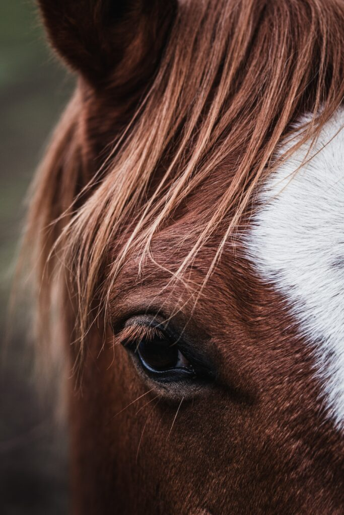 pourquoi un cheval pourrait-il m'aider à mieux vivre